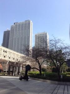 東京都庁の桜の木