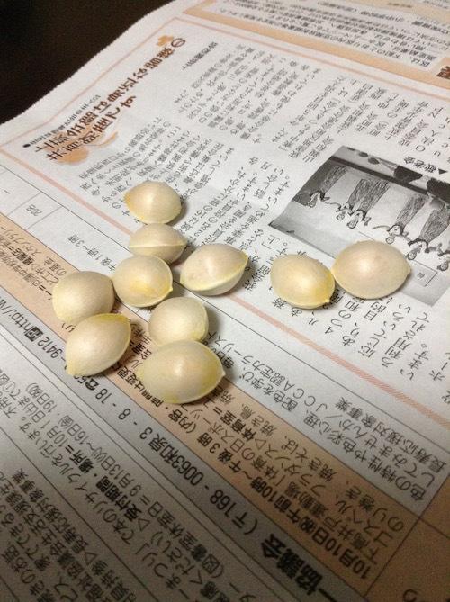 銀杏の処理方法と料理法。ダイエット向きの健康ナッツを東京中で拾う