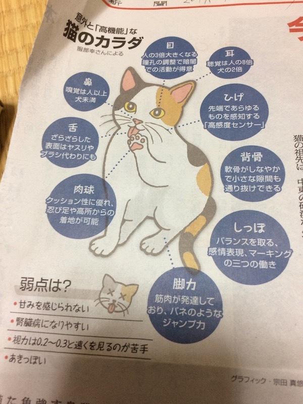 20歳超え始めた老齢ネコの体の変化について