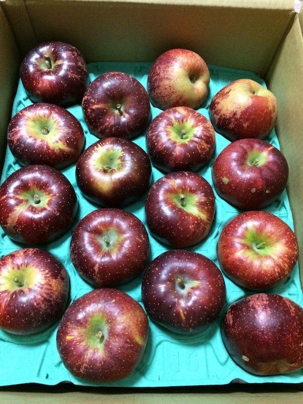 長野県上田市のりんご10kgはふるさと納税にお得・高コスパでおすすめ