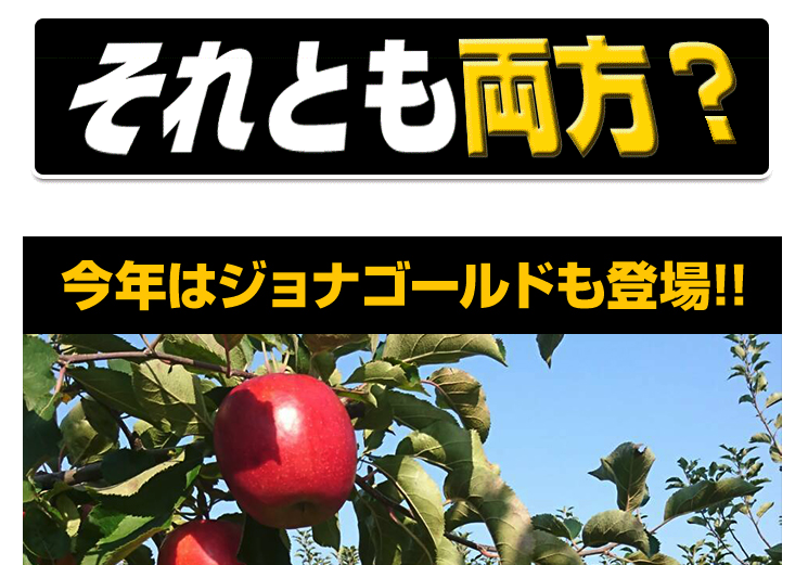 北国お米ショップ(エイト)の青森葉取らずりんご訳あり10kgはおすすめ