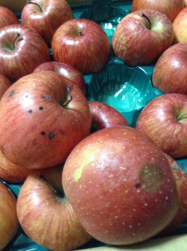フルーツ甘味屋GGY(楽天市場)で訳ありりんご10kgを買うのがおすすめ