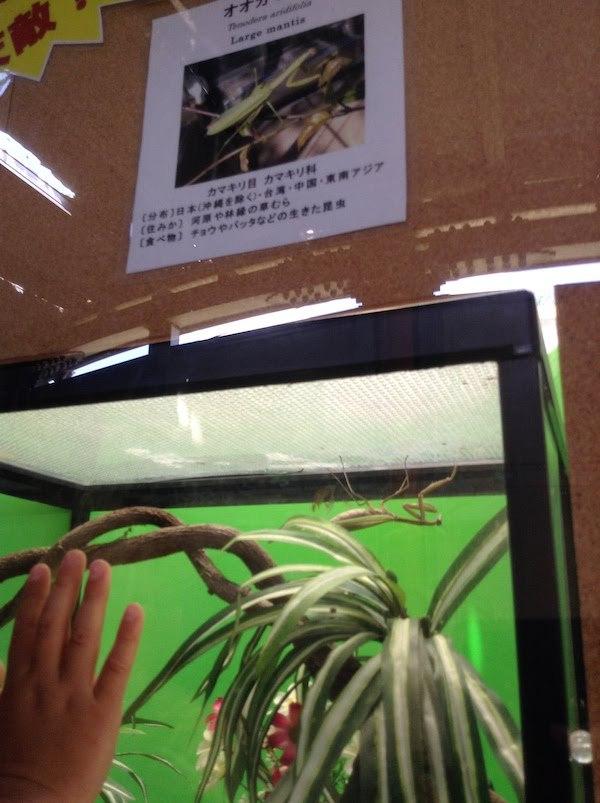 昆虫生態園には生きている昆虫がいる