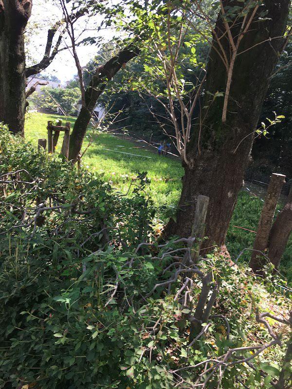 東大駒場前の駒場野公園(目黒区)の田んぼは子供と虫捕りにおすすめ