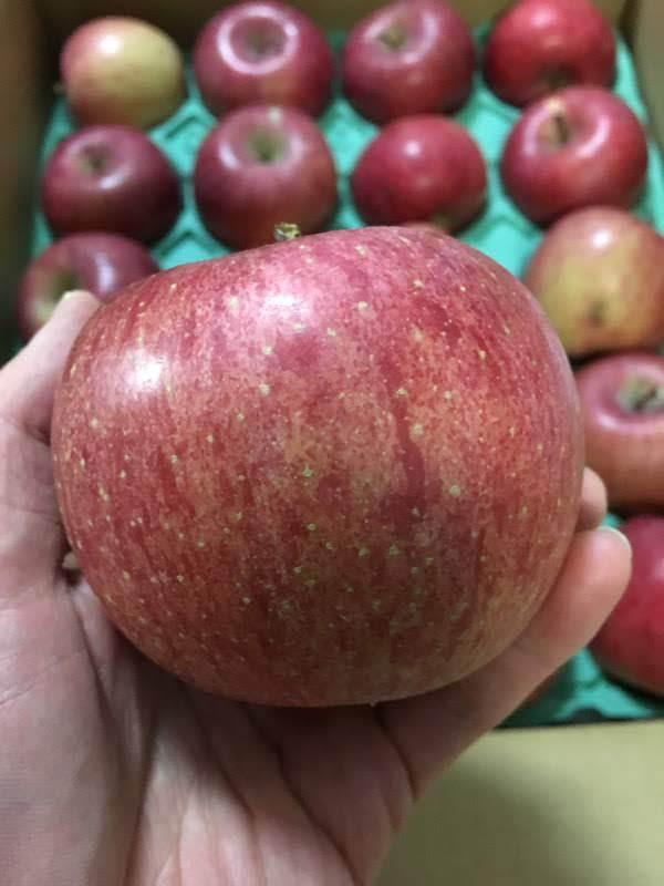 ふるさと納税でひょう害サンふじりんご10kgは高コスパでおすすめ