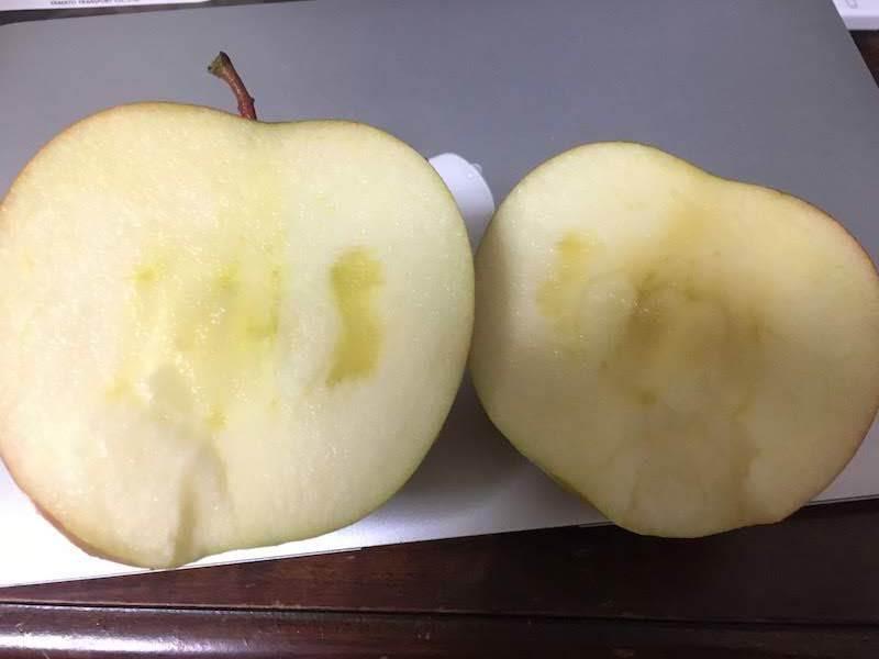 サンふじリンゴ 約5Kg