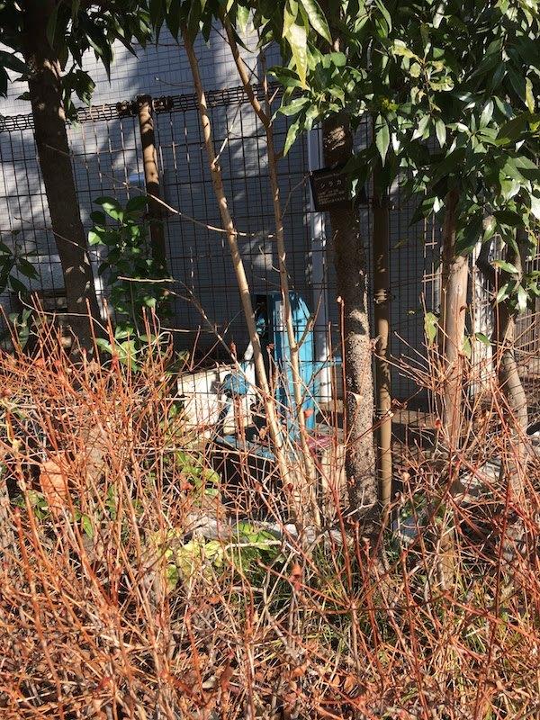 高井戸中学校横の井戸
