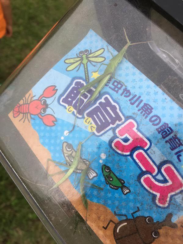 和田堀公園ワンパク広場でも虫捕り(バッタ・カマキリ等)がおすすめである