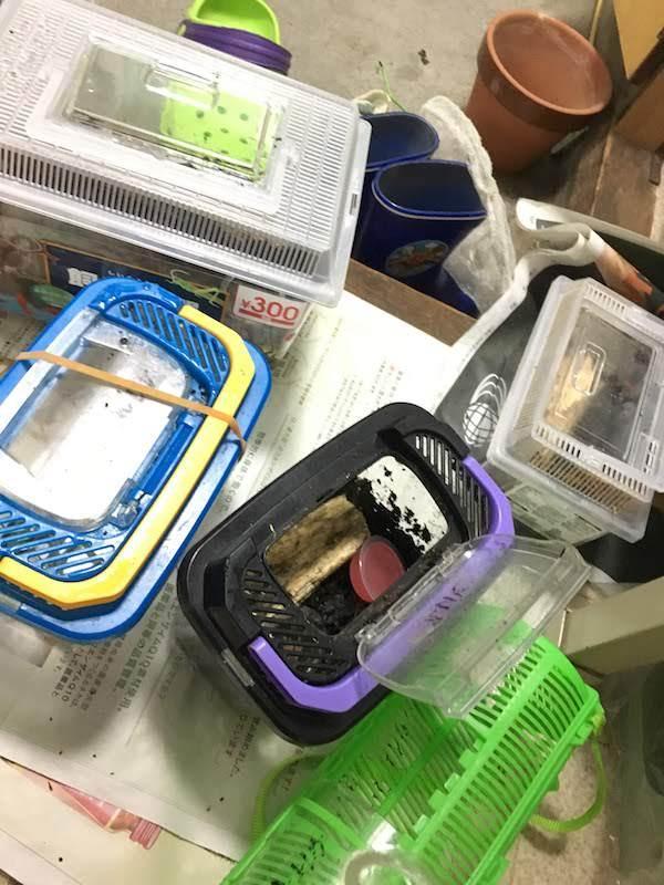 ホームセンターで買った園芸用腐葉土でカブトムシの幼虫を育てる