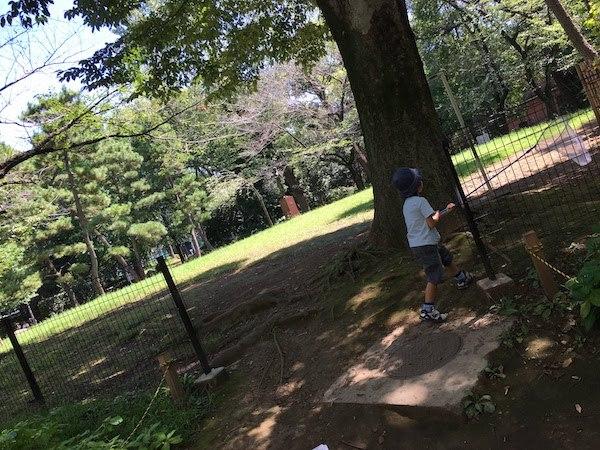 有栖川宮記念公園(東京都港区)は子連れ家族での昆虫採集におすすめだ