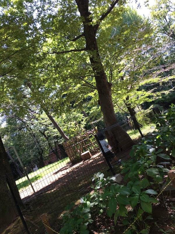 有栖川宮記念公園はカブトムシ・クワガタ・セミ・カマキリ取りにおすすめ