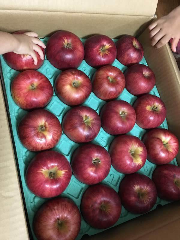 ふるさと納税で青森県五所川原市の家庭用りんご10kgはおすすめである