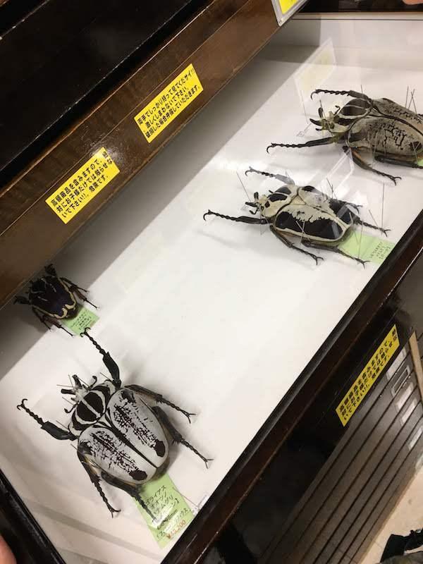 むし社は昆虫好きの子供がいる子育て家族におすすめである