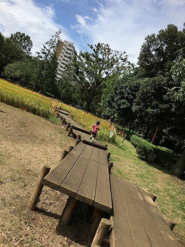 秋の陽公園(東京都練馬区光が丘)の水田や小川は子連れ家族におすすめ