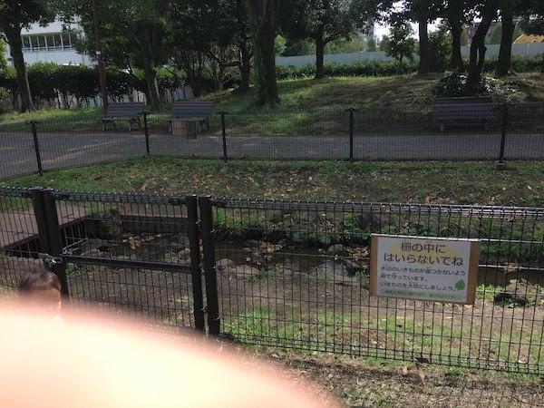 秋の陽公園(東京都練馬区光が丘)はトンボやセミ捕りにおすすめである
