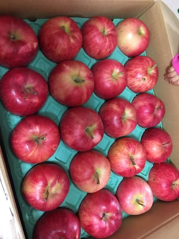 土岐りんご園のサンつがるとジョナゴールドの比較。どちらも美味しい